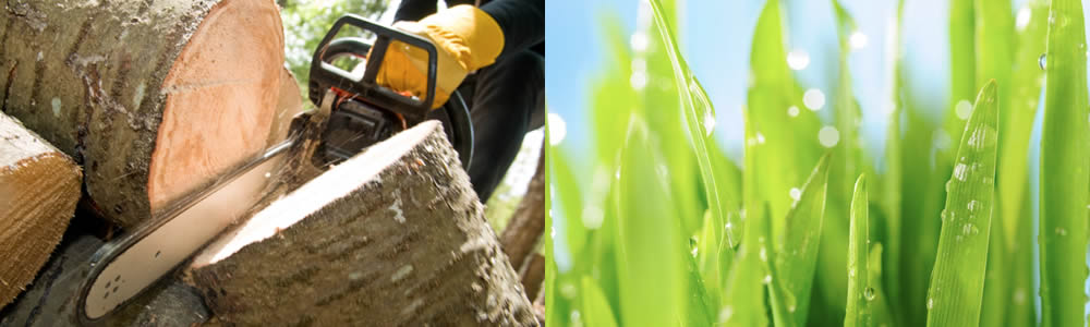 Tree Services Indian Rocks Beach FL Tree Service Professionals in Indian Rocks Beach FL Free Tree Service Quotes in Indian Rocks Beach FL Tree Service Estimates in Indian Rocks Beach FL