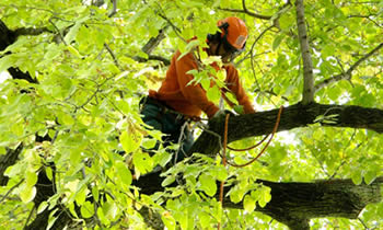 Tree Trimming in Clearwater FL Tree Trimming Services in Clearwater FL Tree Trimming Professionals in Clearwater FL Tree Services in Clearwater FL Tree Trimming Estimates in Clearwater FL Tree Trimming Quotes in Clearwater FL