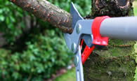 Tree Pruning Services in Clearwater FL